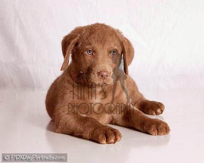 PDX Dog Portraits